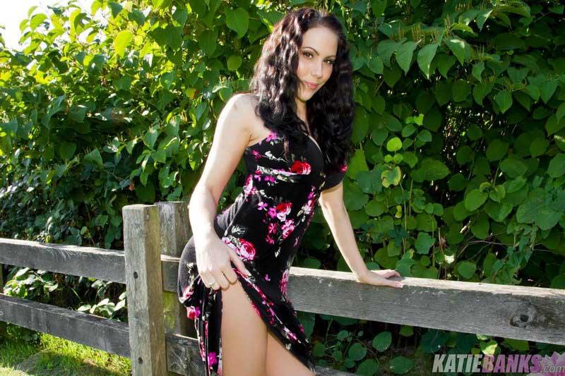 Katie Banks - Fence Line Feline