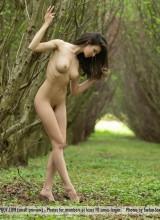 Jasmine 4