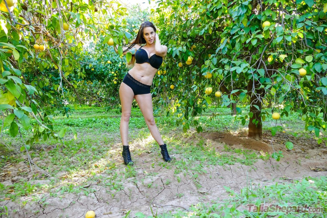 Talia Shepard - The Lemon Orchard 7