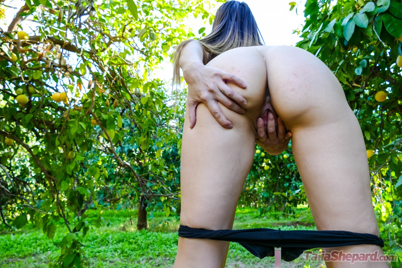 Talia Shepard - The Lemon Orchard 17
